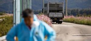 Disinfectant Gate untuk Ternak Sapi Instalasi Mudah Banyak Manfaat